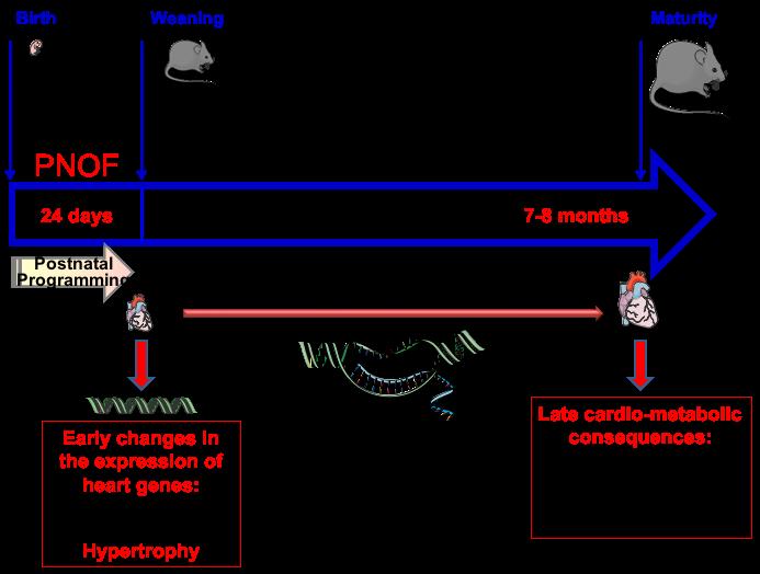 Perinatal-Programming